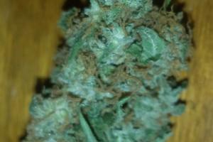 Obama OG Kush Marijuana Strain product image