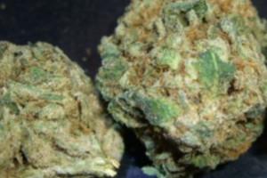 Og Presidential Kush Marijuana Strain product image