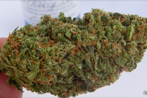 Orange Crush Marijuana Strain product image