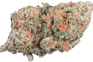 Orange Sherbet Marijuana Strain product image