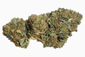 Greenhouse blend Marijuana Strain product image