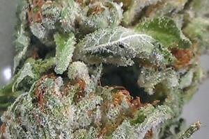 Pink Kush Marijuana Strain product image