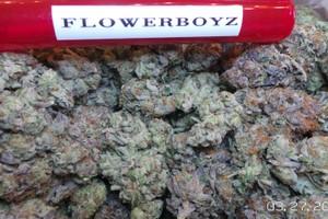 Platinum Girl Scout Cookies Marijuana Strain product image