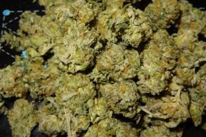 Cookies Kush Marijuana Strain product image
