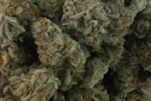 Redwood Kush Marijuana Strain product image