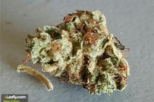 Sage and Sour Marijuana Strain product image