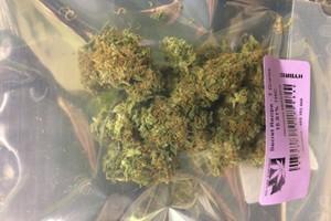 Secret Recipe Marijuana Strain product image