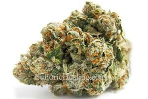 SFV OG Kush Marijuana Strain product image