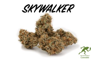 Skywalker Kush Marijuana Strain product image