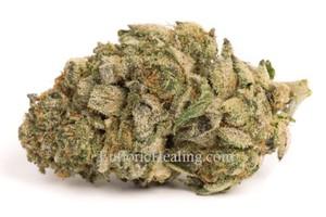 Sour Banana Sherbet Marijuana Strain product image