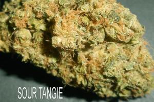 Sour Tangie Marijuana Strain product image