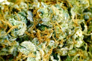 Sour Tsunami Marijuana Strain product image