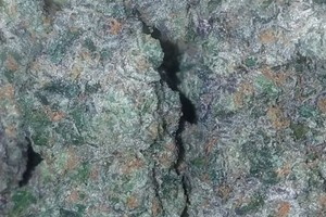 sunset sherbert Marijuana Strain product image