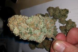East Coast Sour Diesel Marijuana Strain product image