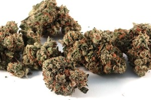 True OG Marijuana Strain product image