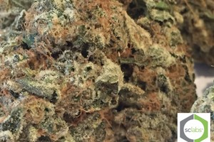 Wedding Cake Marijuana Strain product image