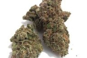 White Rhino Marijuana Strain product image