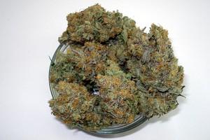 Wonder Woman Marijuana Strain product image