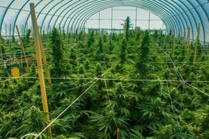 Life Gardens marijuana producer