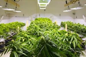 Salish Sativas marijuana producer