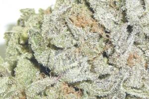 Afgooey Marijuana Strain featured image