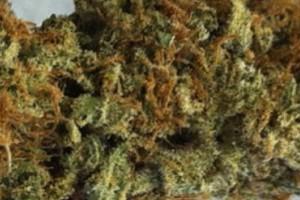 Amnesia Haze Marijuana Strain featured image