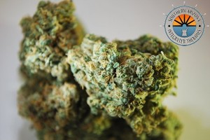 Canna-Tsu Marijuana Strain featured image