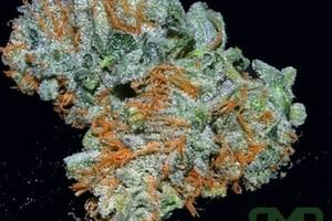 Cherry Slyder Marijuana Strain featured image