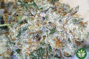 Death Star Marijuana Strain featured image