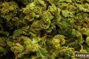 Flav Marijuana Strain featured image