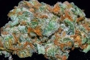 Jack the Ripper Marijuana Strain featured image