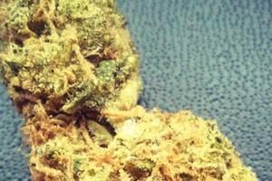 Juliet Marijuana Strain featured image