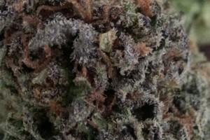 Maui Wowie Marijuana Strain featured image