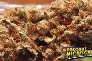 Nebula Marijuana Strain featured image