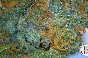 Northern Lights Marijuana Strain featured image
