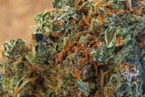 Purple Dragon Marijuana Strain featured image