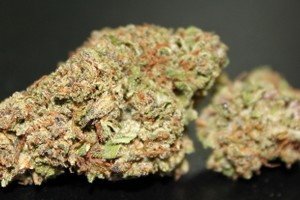 Purple Rain Marijuana Strain featured image