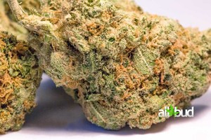 Romulan Marijuana Strain featured image