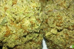 Sour Kush Marijuana Strain featured image