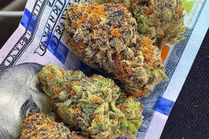 #1 Marijuana Strain image