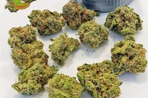 9 Pound Hammer Marijuana Strain image