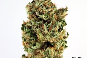 Afghan Kush Marijuana Strain image