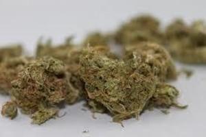 Afghani CBD Marijuana Strain image
