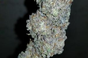 Amnesia Haze Marijuana Strain image