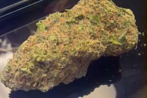 Arjan's Strawberry Haze Marijuana Strain image