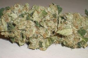 Aspen OG Marijuana Strain image