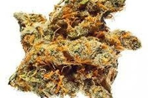 Bay 11 Marijuana Strain image