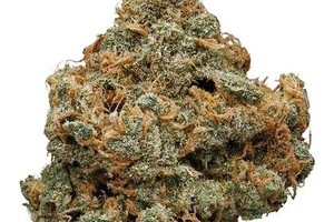 Beyond Blue Dream Marijuana Strain image