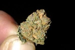 Birthday Cake Kush Marijuana Strain image