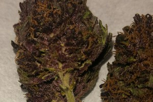 Black Cherry Soda Marijuana Strain image